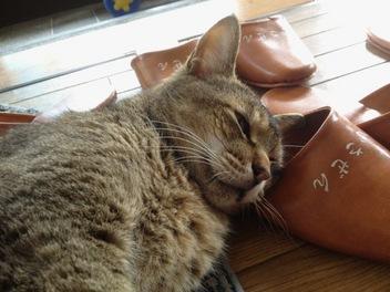 いさぜん猫2012年5月