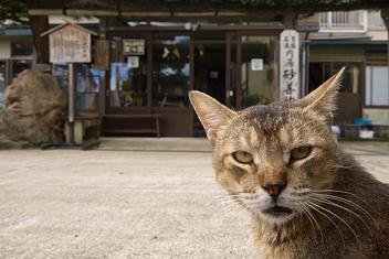 いさぜん旅館の猫