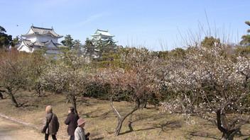 名古屋城の梅花2