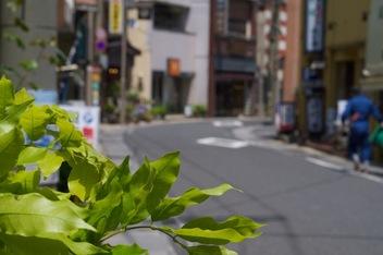 温泉街の新緑