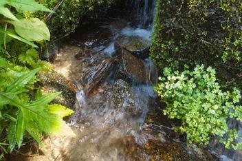 沼井林道 湧き水