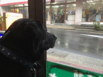 愛犬バード君